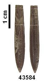 PSEUDOBELUS BICANALICULATUS (BLAINVILLE, 1827)