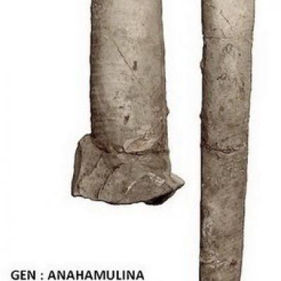 Anahamulina