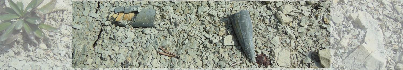Céphalopodes crétacés