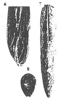 A6 var guillautona besairie 1