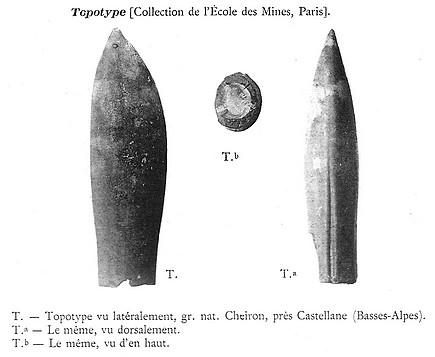 D lata topotype
