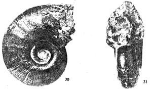 En ptclerc1