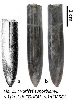Fig 15 leg
