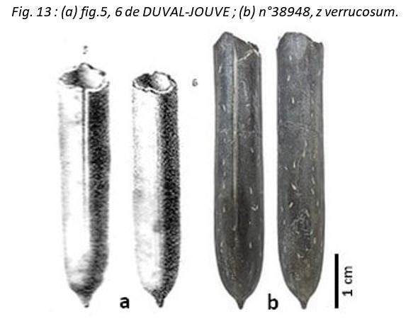 Fig13 leg
