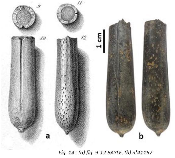 Fig14 leg