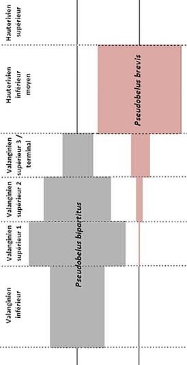 Répartition stratigraphique
