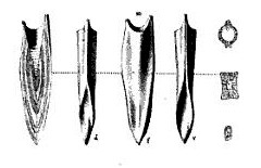 Isoscelis duval