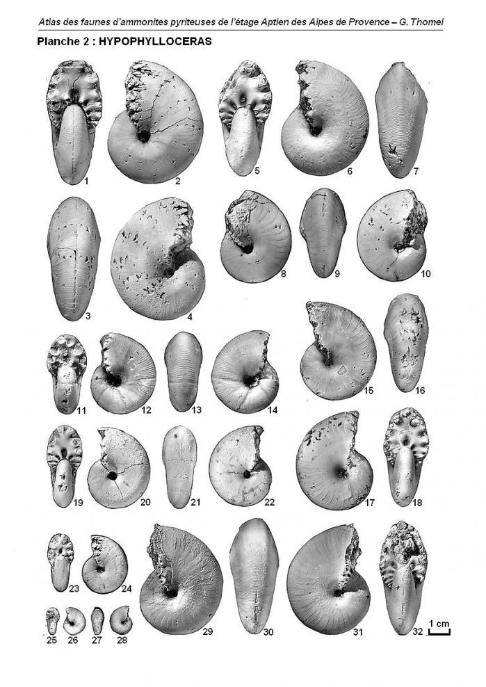 Ammonites de l'Aptien - Planche 2