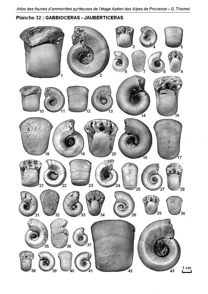 Ammonites de l'Aptien - Planche 32