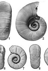 Atlas des ammonites de l'Aptien