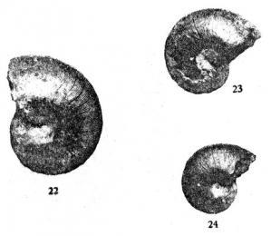 Ptclerc 1